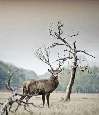 Mit kell tudni a vadak által okozott mezőgazdasági károkról?