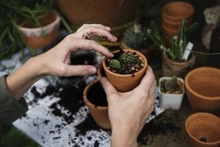 A kertészkedés előnyei