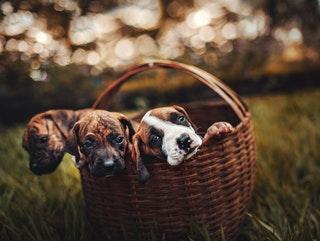 Vásárolj állateledel webáruházból